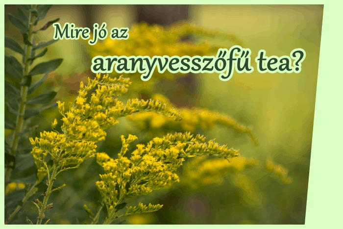 Az aranyvesszőfű tea mire jó?