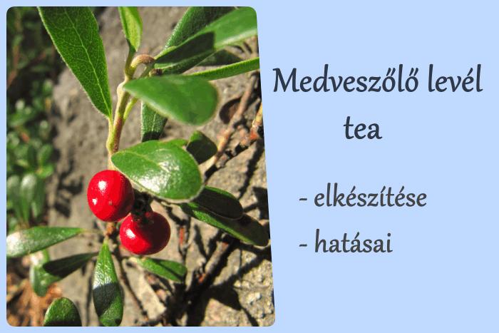 Medveszőlő tea elkészítése