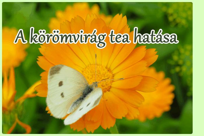A körömvirág tea hatása