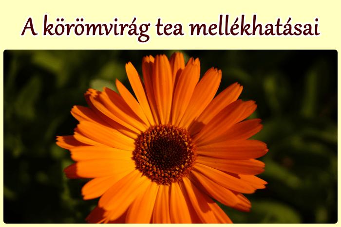 A körömvirág tea mellékhatásai