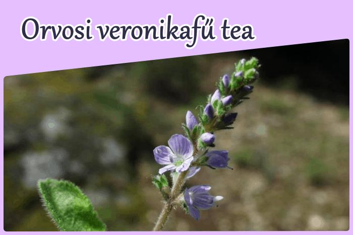 Az orvosi veronikafű tea mellékhatása, hatása
